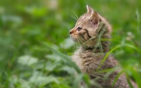 Котенок гуляет в траве