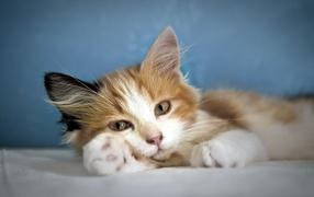 Кошка лежит на лапе