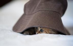 Котенок под шляпой