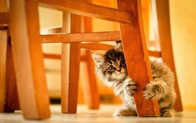 Котенок под стулом