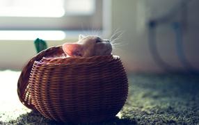 Котенок в круглой корзине