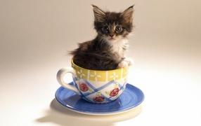 Котенок в чайной чашке