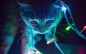 Котенок в свете гирлянды