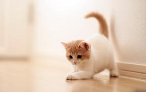 Котенок играет на полу