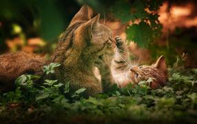 Котенок играет с кошкой