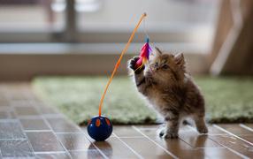 Котенок играет с перьями