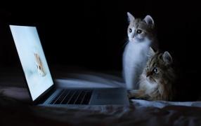 Котята у ноутбука