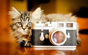 Кот за фотоаппаратом
