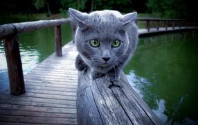 Кот на перилах