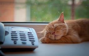 Кот спит около телефона