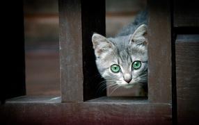 Котенок за забором