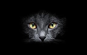 Морда кота на черном фоне