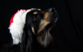 Dog on a black background