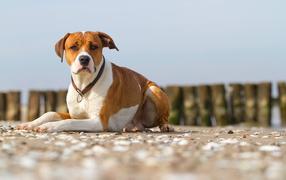 Собаки фото обои на рабочий стол