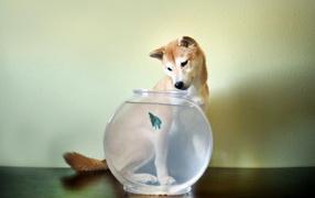 Собака смотрит на рыбу