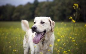 Собака на летнем поле