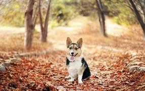 Dog on autumn leaves