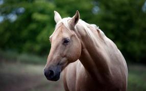 Head of white horses