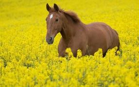 Лошадь в желтых цветах