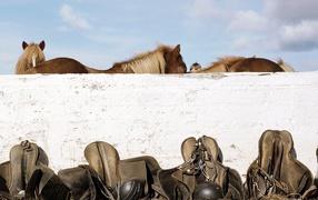 Лошади и седла