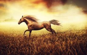 Лошадь скачет по пшеничному полю
