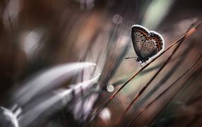 Бабочка на стебле