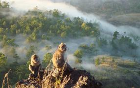 Обезьяны сидят на скале