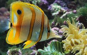 Colour fish aquarium