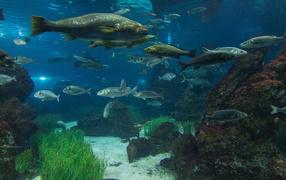 Рыбы в реке
