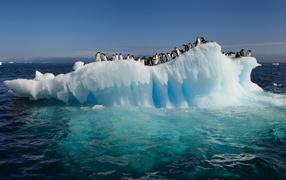 Пингвины на тающей льдине