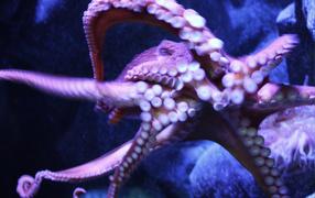 Присоски осьминога