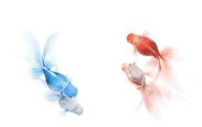 Золотая и синяя рыбы