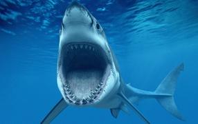 Пасть белой акулы