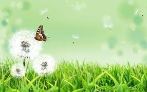Бабочка на природе