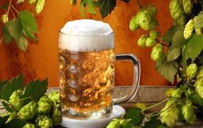 Mug of beer and hops