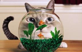Кот смотрит на рыбок