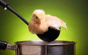 Цыпленок в кастрюле