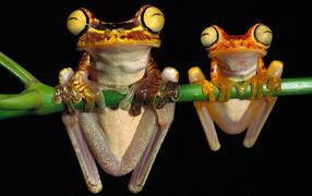 Лягушки висят на ветке