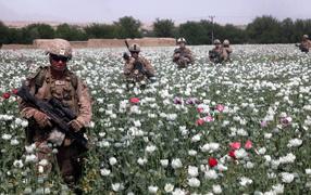 Солдаты на маковом поле