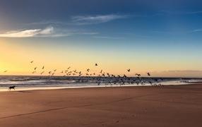 Собака гоняет птиц на пляже