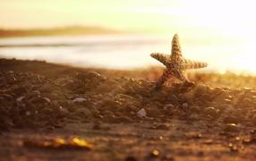 Starfish on the rocks