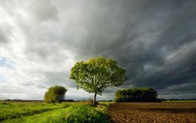 Дерево под темными облаками
