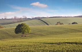 The endless green fields