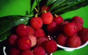 Красивые ягоды растения восковник
