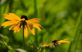 Цветок в траве