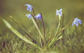 Весенние подснежники на поляне