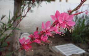 Ветка с розовыми цветками