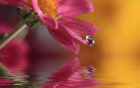 Цветок с каплей воды