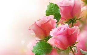 Цветы розы с листьями