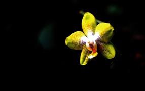 Белая орхидея на черном фоне 7